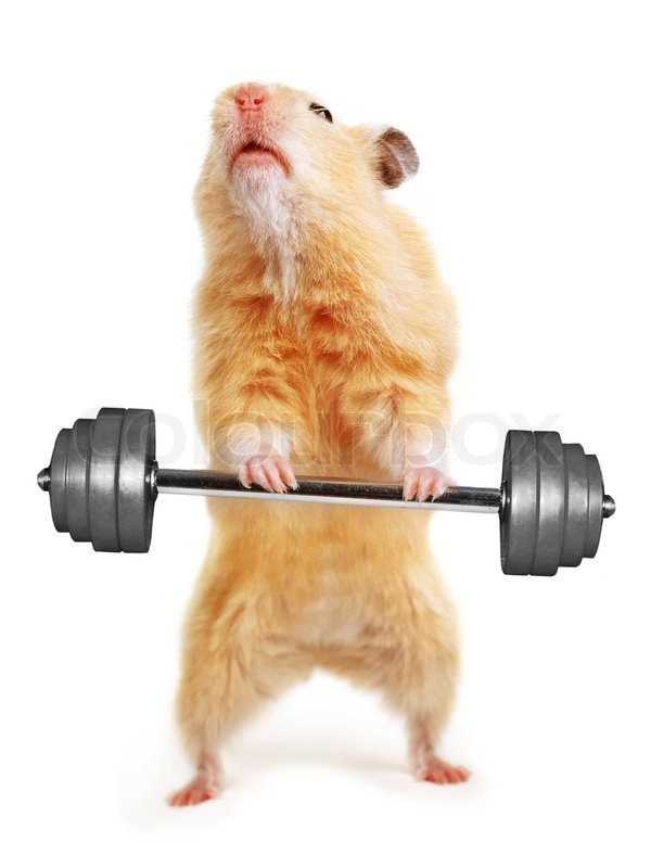 3280106-hamster-with-bar-isolated-on-white