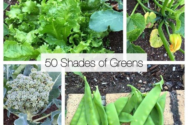 50 shades of greens