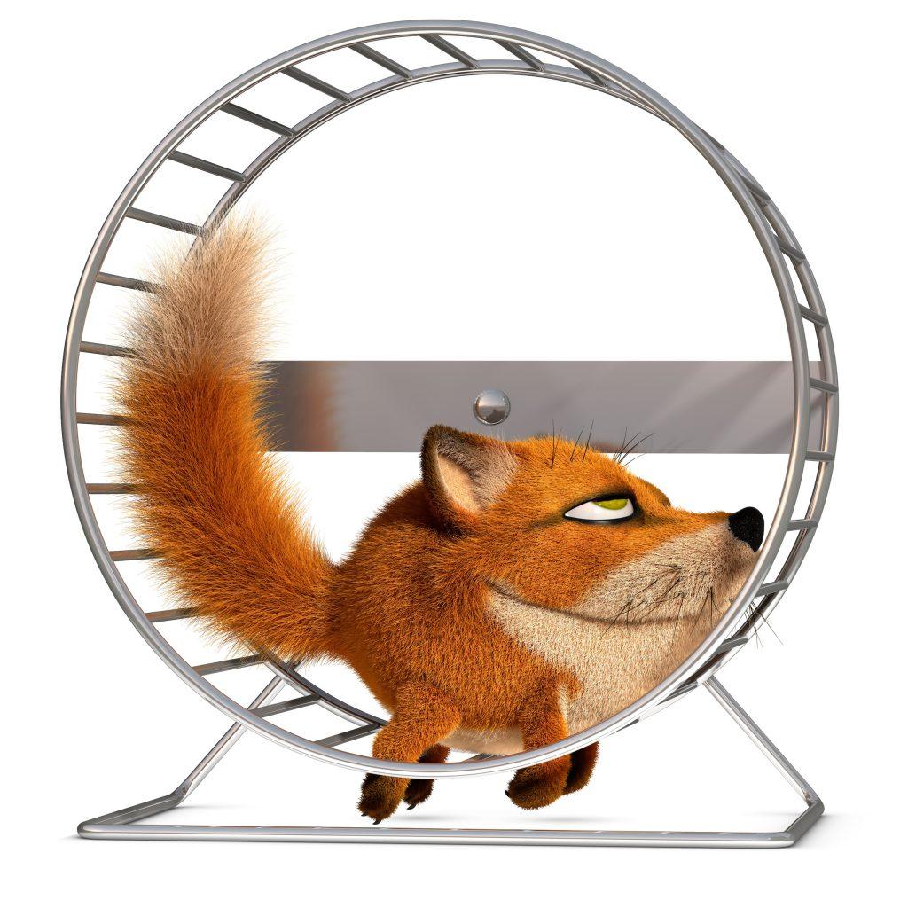 Fox in the wheel